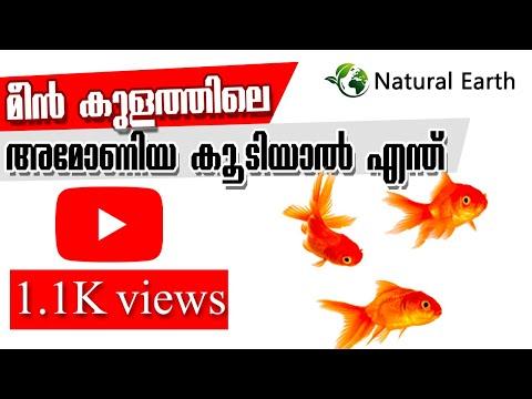 Ammonia On Fish | Reduce Ammonia