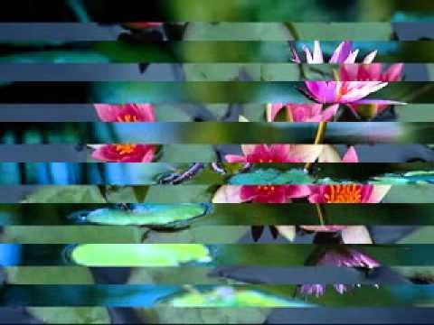 Manipur song..kunjabihari..Taamlaba lamdam amada sakhangnakhi..mp4/h264