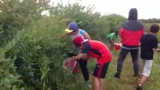 블루베리 농장체험