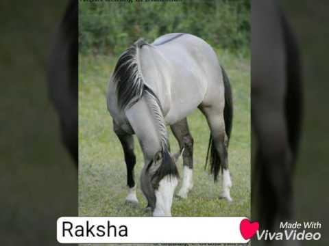 Unice Horse Names😀