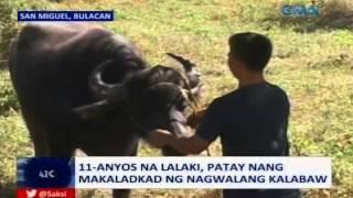 Saksi:  Batang lalaki sa Bulacan, patay nang makaladkad ng nagwalang kalabaw