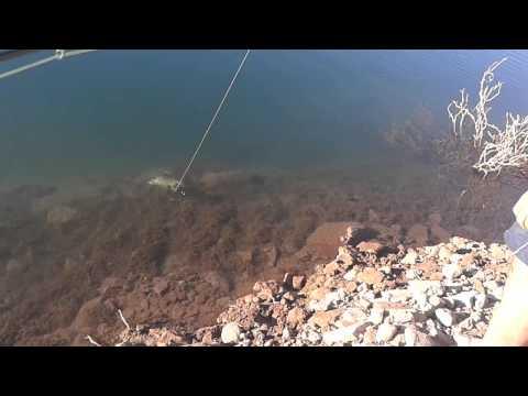 Abejita pescando trucha en potrerillos