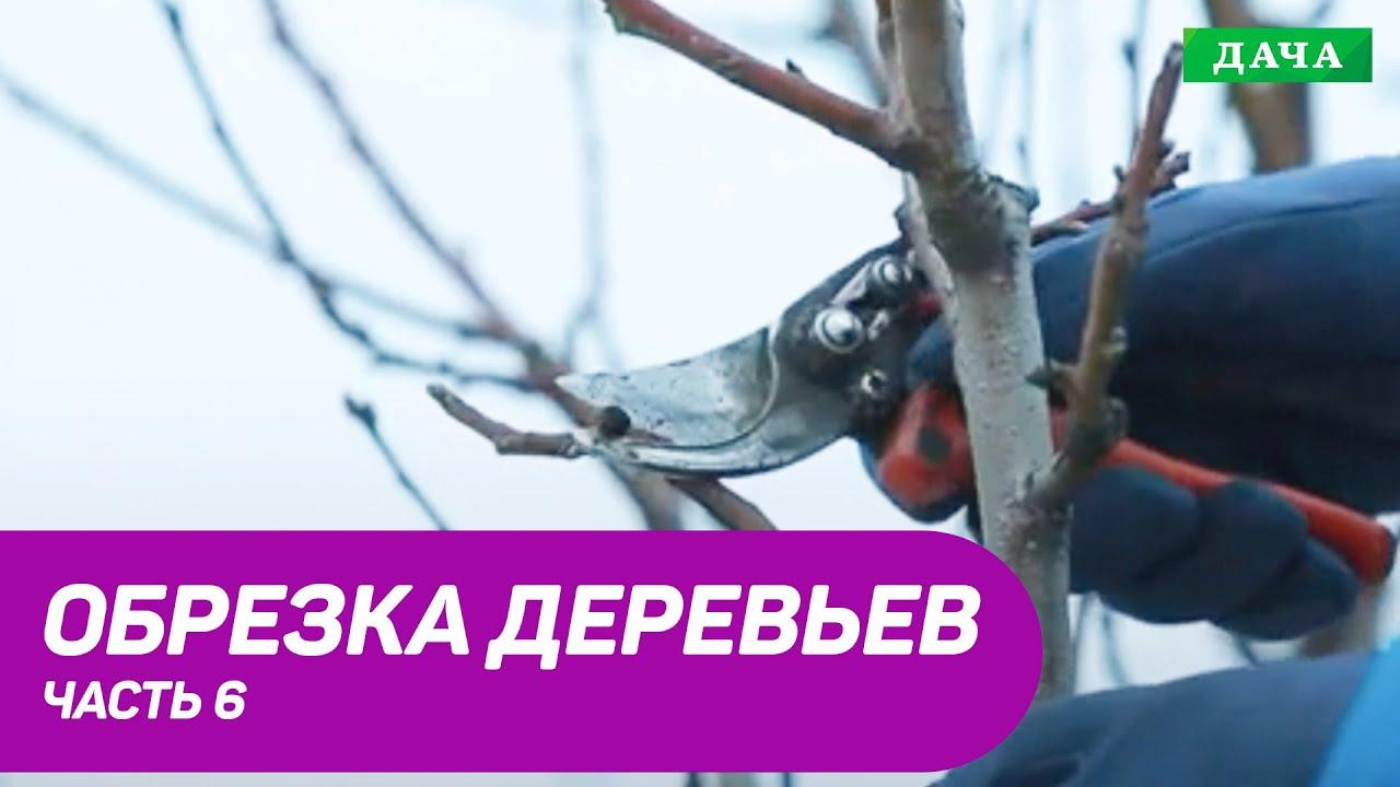 Правила и техника обрезки плодовых деревьев. Часть 6.