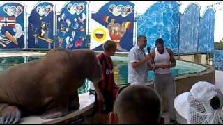 Акватория- театр морских животных Ялта 2011