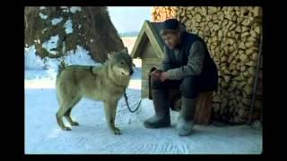 волчица.