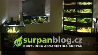 Moje stěna z rostlinných akvárií a nejen to (celkem 13 akvárií)