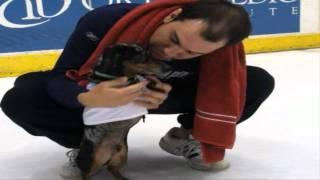 stampede wiener dog race commercial