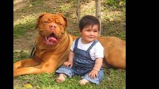 Страшные гигантские собаки и дети.   Смешное видео