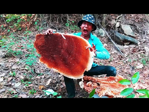 Giant honey bees - Life in Thailand - Harvesting Honey from Giant Honeybees in Thailand | part 01