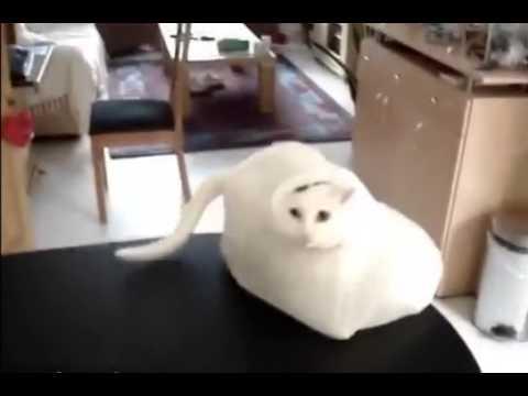 Фото кот в ловушке