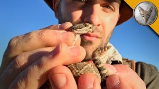 RISKY! Catching a Rattlesnake by its Tail