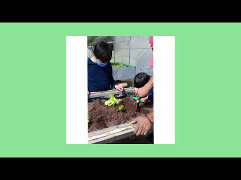 La siembra y la cosecha de nuestras semillas