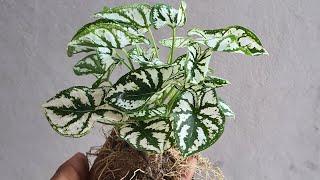 7 Plantas Perenes Que você Pode Adquirir sem Medo – Plantas Fáceis de Cuidar