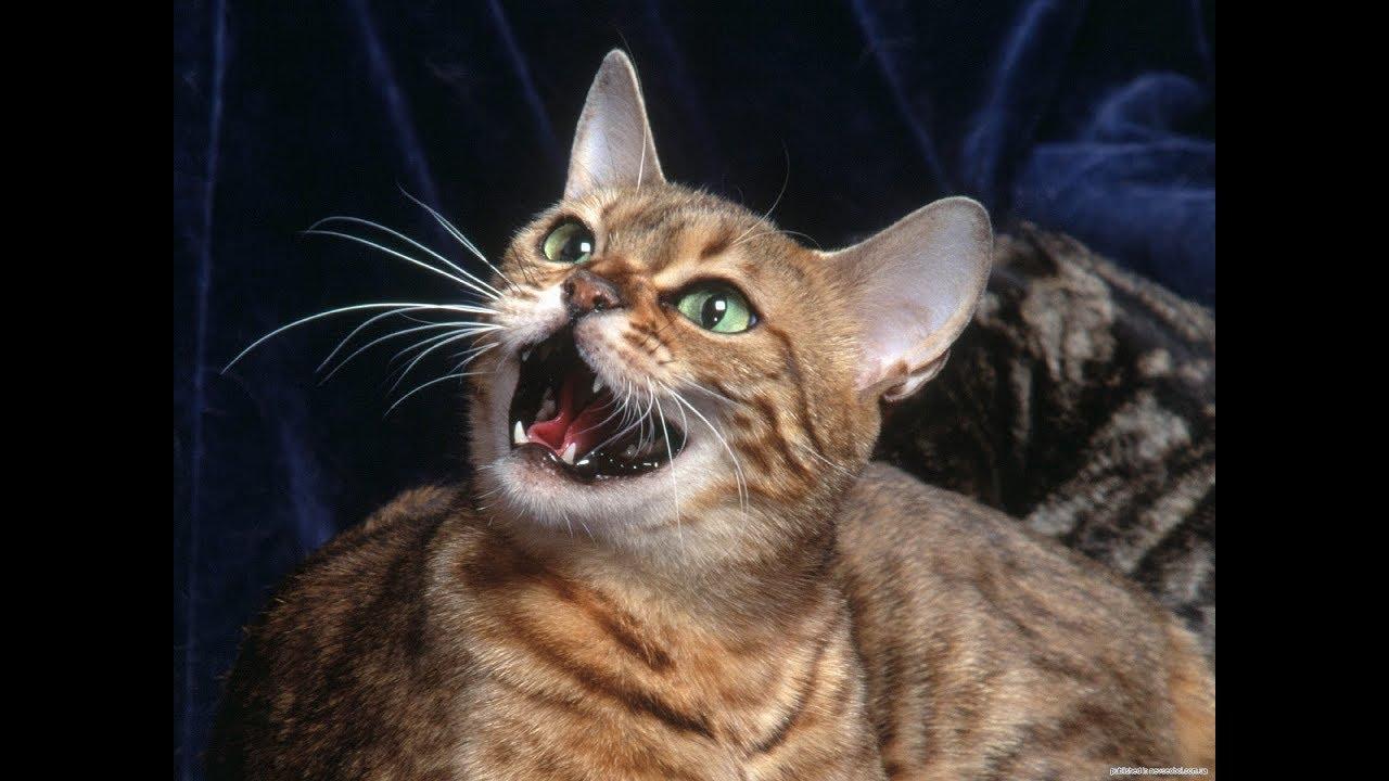 Дальневосточные котята Алёшка и Софья - YouTube