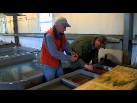 A Visit To The Southeastern Massachusetts Trout Hatchery