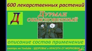 дурман обыкновенный 600 лекарственных растений