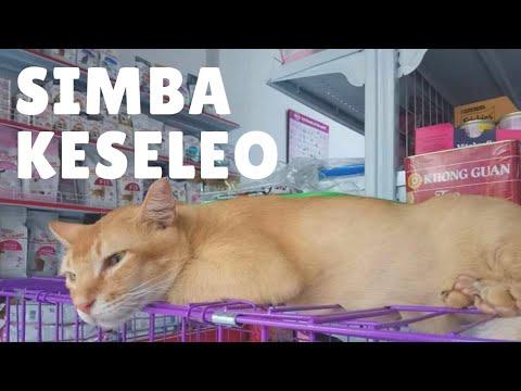 Kaki Kucing Pincang Obati Dengan Minyak Butbut Youtube