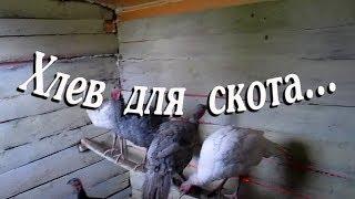 ХЛЕВ ДЛЯ СКОТА//деревенские будни