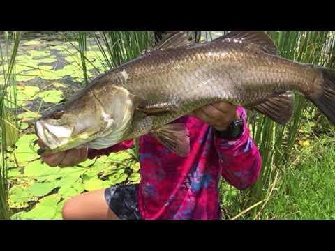 Darwin Land Based Fishing, Durack Lakes Barra