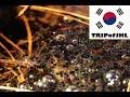 [TRIPofJHL] Namsan Park in February