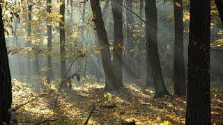 Co to jest las? - film przyrodniczo-edukacyjny dla dzieci