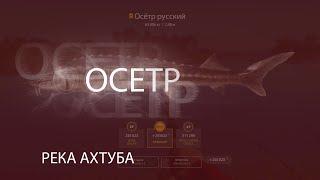 Русская Рыбалка 4 РР4 RF4 Река Ахтуба ОСЕТР без прилова