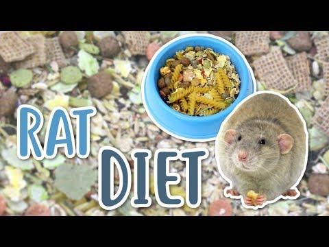 RAT DIET 101 | What Should You Feed Your Rats?
