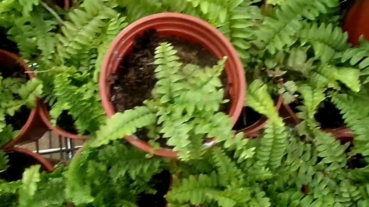 Продажа комнатных растений конотоп ❀. В сервисе объявлений olx. Ua конотоп можно легко и быстро продать или купить комнатные цветы. Настоящих садоводов порадуют доступные цены и широкий выбор. Цветок тещин язык. Дом и сад » комнатные растения. 150 грн. Конотоп. 26 дек. В избранные.
