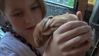 Разведение кроликов в яме и клетке часть 11 Иркутск(Кролики в яме Иркутск, обзор фермы, что произошло на ферме за неделю, окрол, крольчата и т.д. Все видео на..., 2016-09-12T14:45:16.000Z)