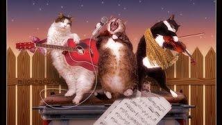 ПОЮЩИЕ КОТЫ)*БЕСПРЕДЕЛ НА ПОМОЙКЕ* коты читают рэп)Тимати был бы в шоке))))