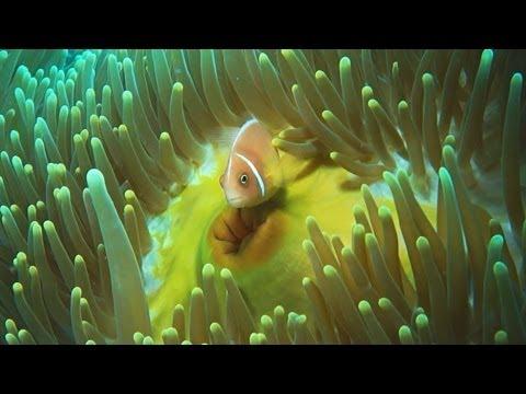 Kimbe Bay Diving, Papua New Guinea