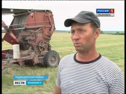 Заготовка кормов в хозяйствах Радищевского р он  ГТРК Волга  15 07 2014