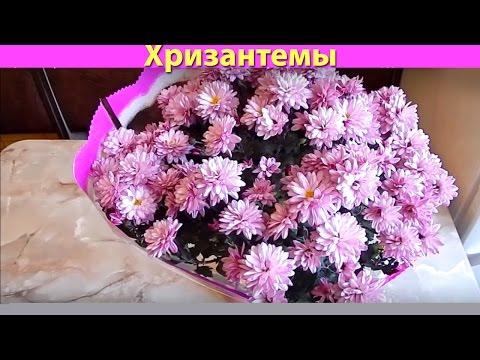 Букет из роз и хризантем.