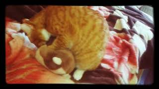 Что будет с котом, если капнуть валерианы на его игрушку?