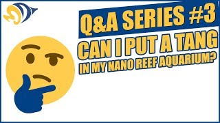 Q&A Series #3: Can I Put a Tang in my Nano Reef Aquarium?