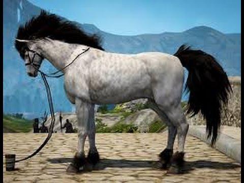 Black desert online Horse capture and breeding