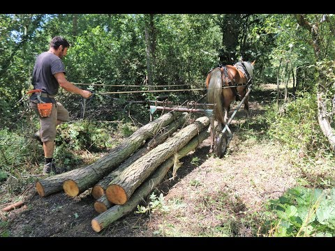 Horse Logging In The New Forest