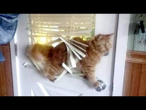 Watch 100 TIMES, YOU WILL STILL LAUGH! - Funniest TROUBLEMAKING ANIMALS videos