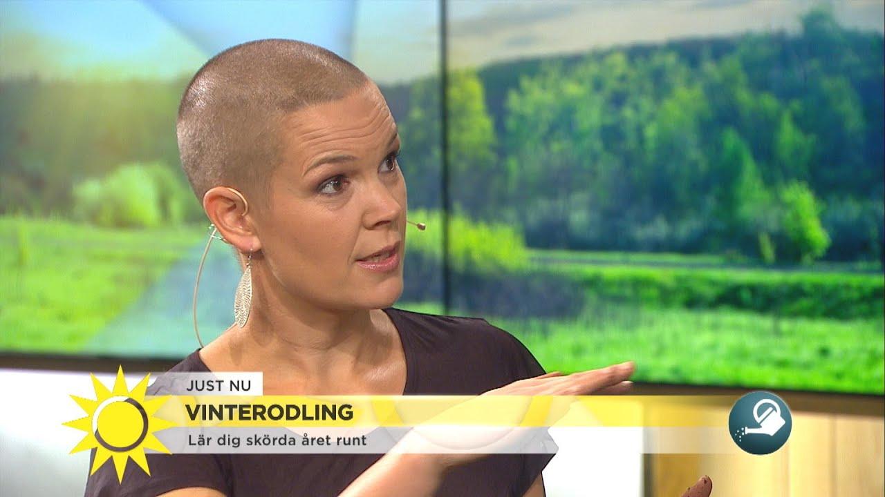 Vinterodling – lär dig skörda året runt - Nyhetsmorgon (TV4)