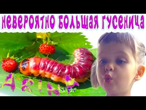 МОФ Инициатива Розы Отунбаевой