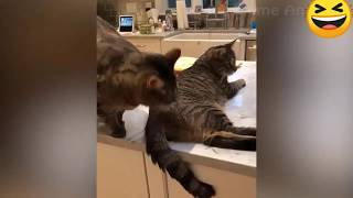 Funniest Animal Dog And Cutest Cat😆😆😆