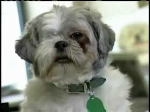 ASPCA Help stop animal cruelty