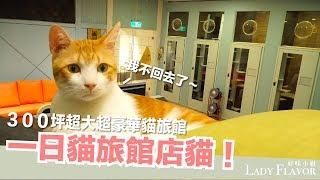 一日貓旅館店貓!當店貓太爽了吧!【好味貓日常】EP14