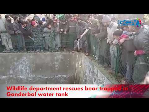 Wildlife department rescues bear trapped in Ganderbal water tank