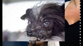 Арахис   спасённая собака, подвергшаяся жестокому обращению и получившая титул Самой уродливой собак