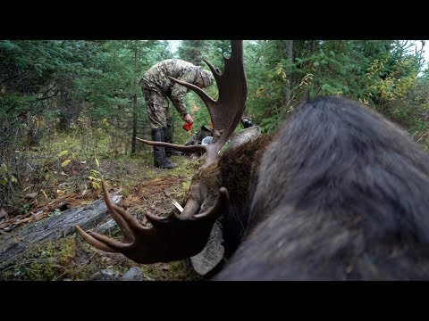 FIRST BULL MOOSE HUNT // MOOSE PART 2 // GRITTY FILM