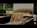 Human Water Cycle: Wastewater