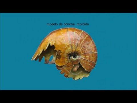 Ammonite de Castrojimeno (divulgación científica)
