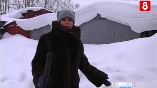 Новосибирск.НОВОСТЬ ДНЯ.Собаки-20.01.2015