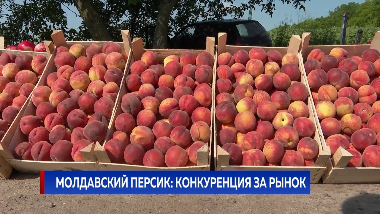 Молдавский персик: конкуренция за рынок